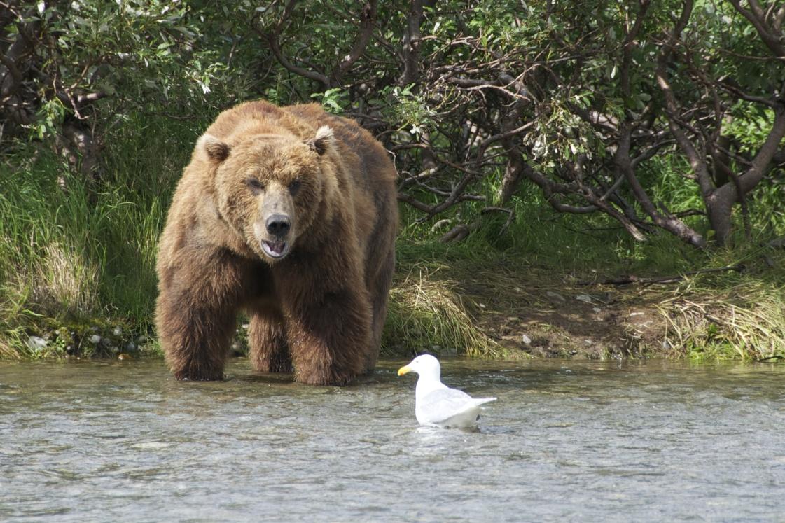 Alaska_2013_2758